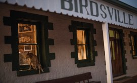 Dog looking into Birdsville Hotel
